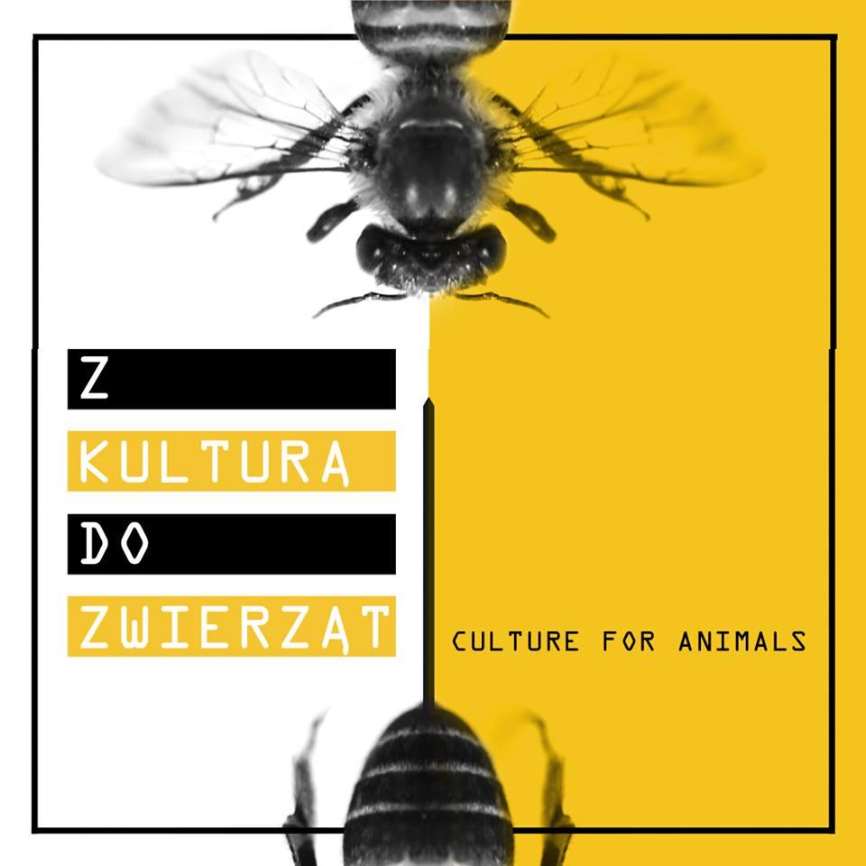 Z Kulturą doZwierząt
