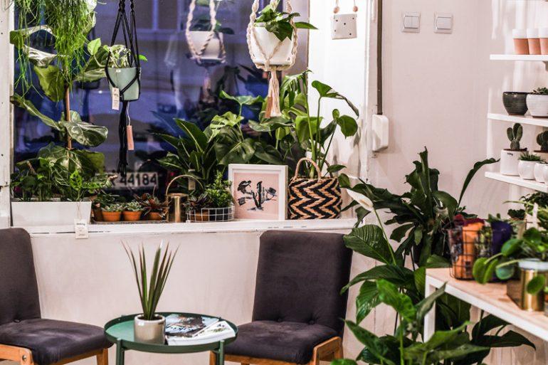 Rośliny wrocław - wizyta w pracowni