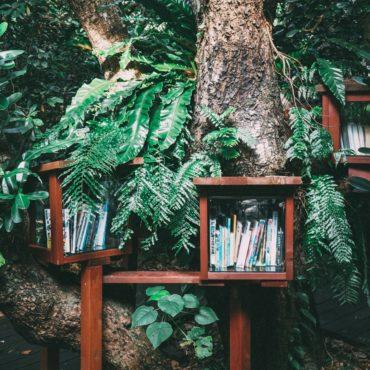 Książki dla fanów roślin